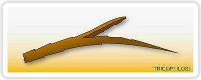 doppie punte capelli sottili