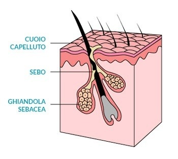 lipidi-capelli-grassi